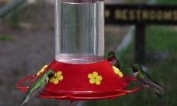 Kolibrik2