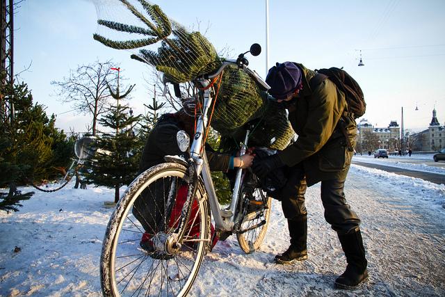 Dovezte si domů vánoční stromeček na kole