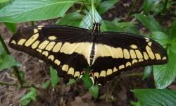 mezi motyly