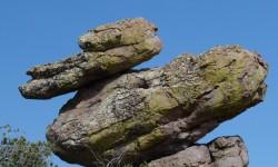 skalni kacer