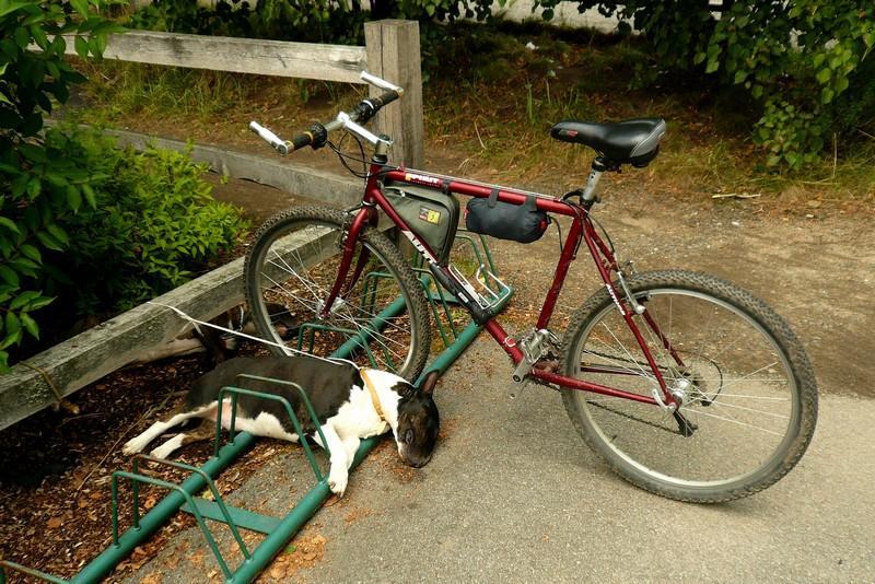 Jak si nenechat ukrást kolo