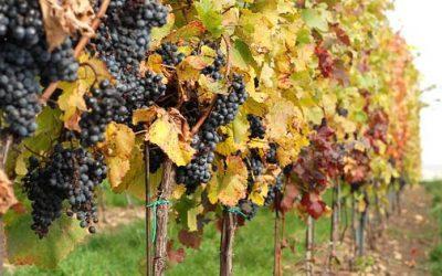 Zavírání Moravských vinařských stezek